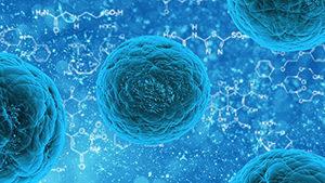 Nuestro cuerpo se renueva constantemente y la mayoría de nuestros tejidos y células desaparecen en poco tiempo.